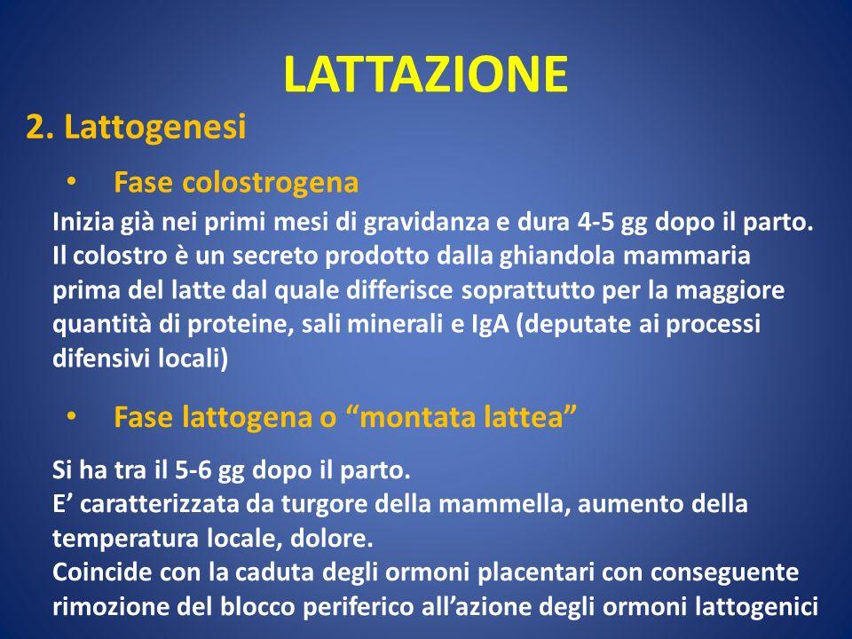 LATTAZIONE 2. Lattogenesi Fase colostrogena