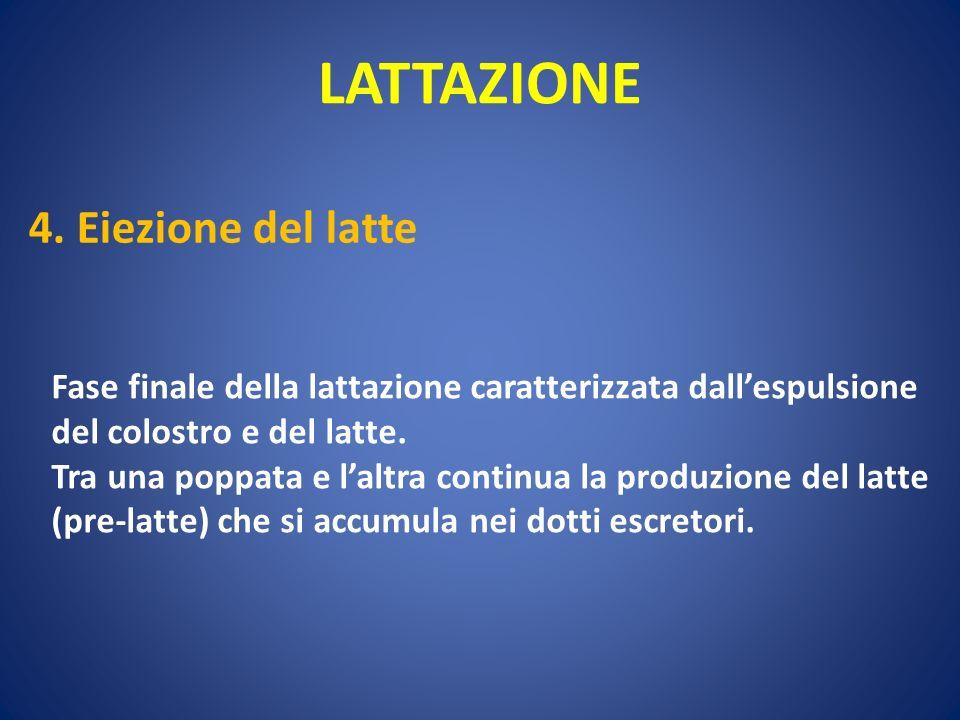 LATTAZIONE 4. Eiezione del latte
