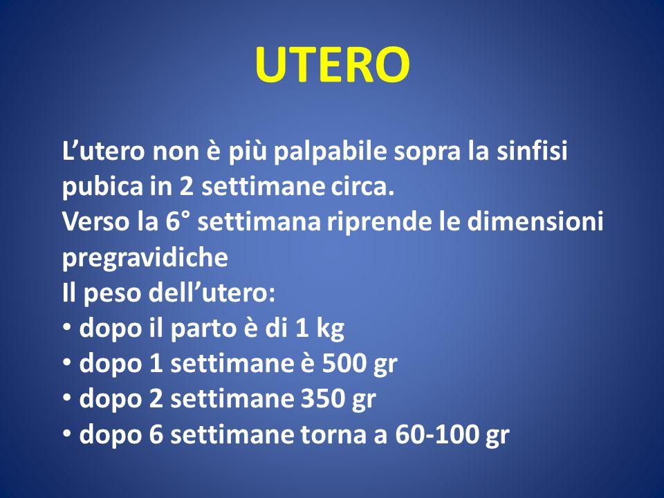 UTERO L'utero non è più palpabile sopra la sinfisi pubica in 2 settimane circa. Verso la 6° settimana riprende le dimensioni pregravidiche.