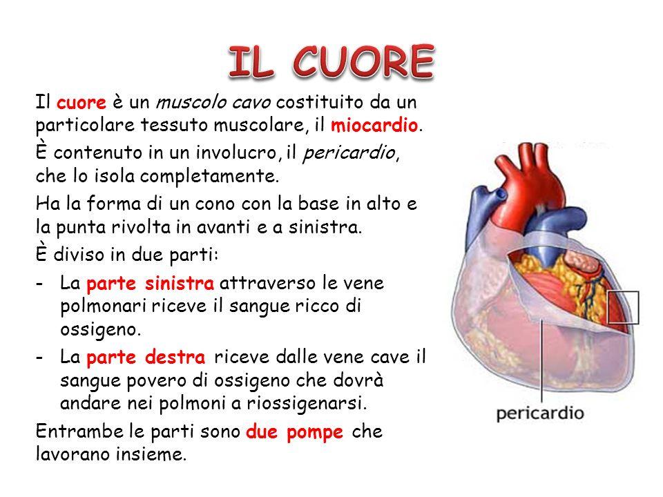 IL CUOREIl cuore è un muscolo cavo costituito da un particolare tessuto muscolare, il miocardio.