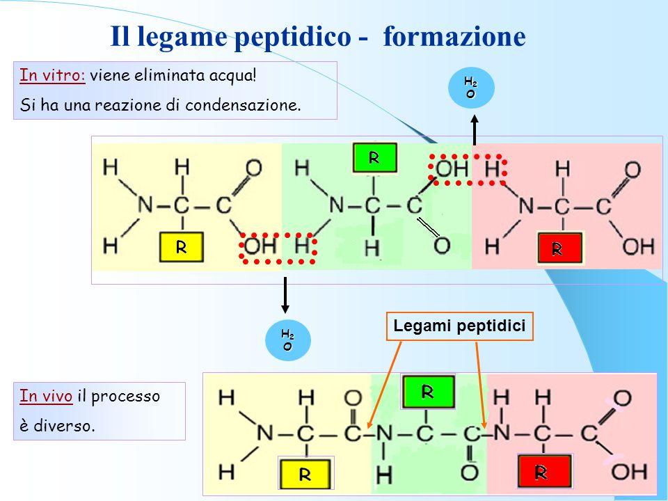 Il legame peptidico - formazione