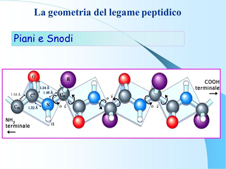 La geometria del legame peptidico