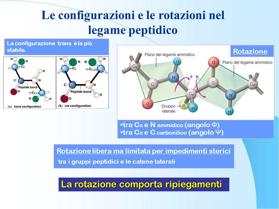 Le configurazioni e le rotazioni nel legame peptidico