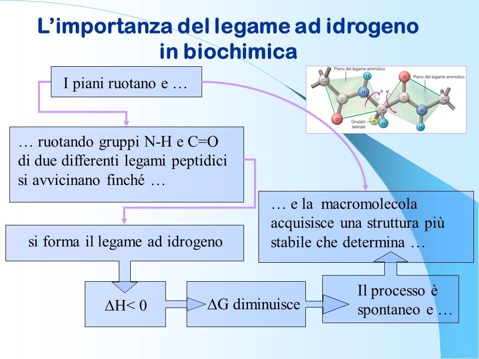 L'importanza del legame ad idrogeno in biochimica