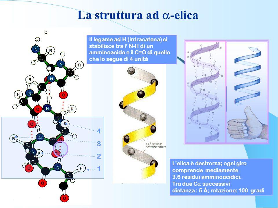La struttura ad a-elica