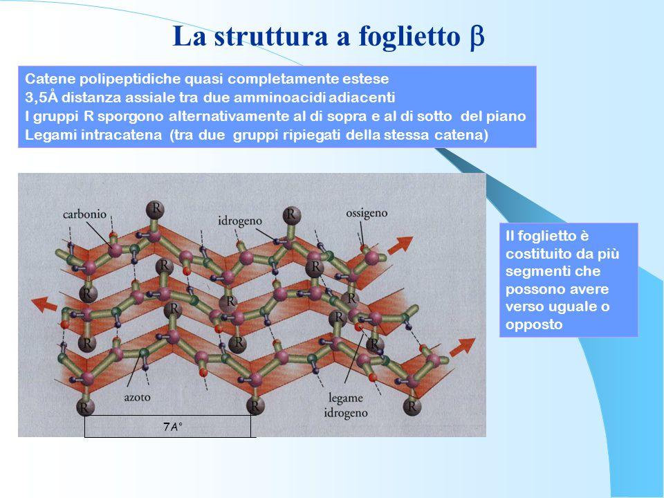 La struttura a foglietto b