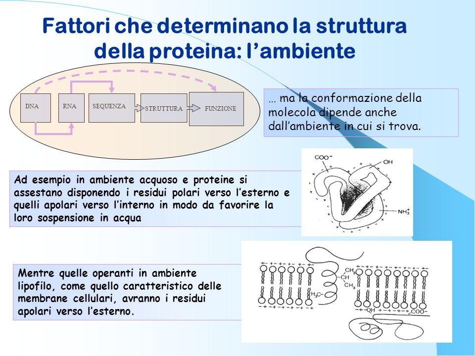 Fattori che determinano la struttura della proteina: l'ambiente