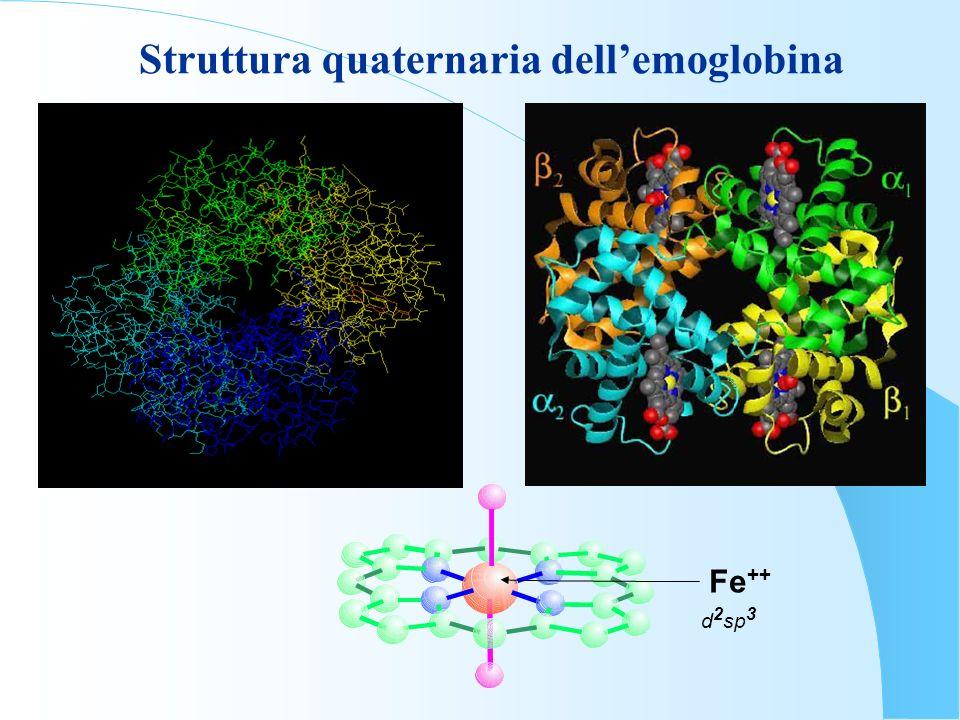 Struttura quaternaria dell'emoglobina
