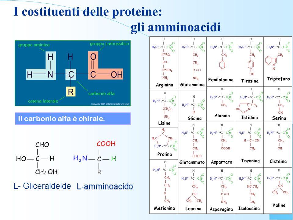 I costituenti delle proteine: gli amminoacidi