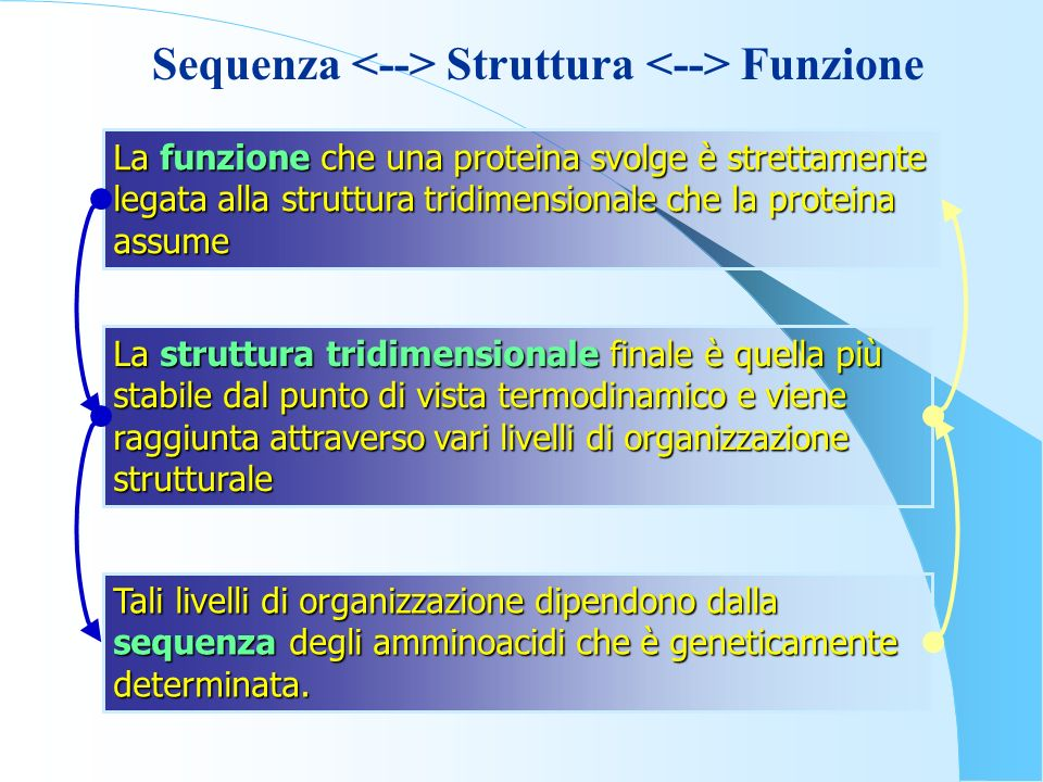 Sequenza <--> Struttura <--> Funzione