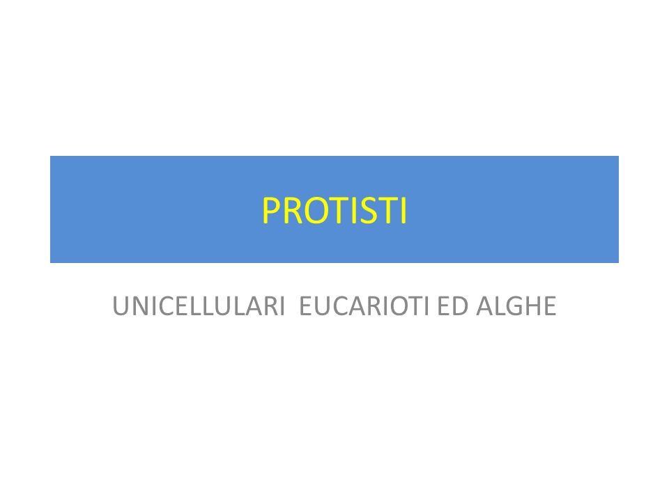 UNICELLULARI EUCARIOTI ED ALGHE