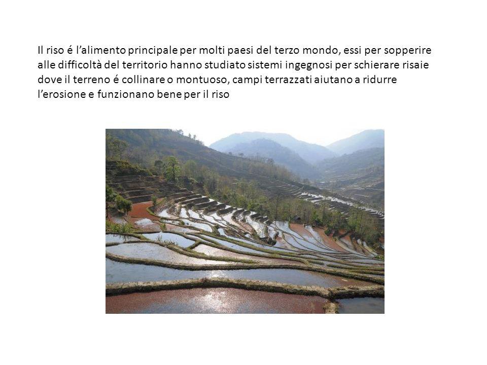 Il riso é l'alimento principale per molti paesi del terzo mondo, essi per sopperire alle difficoltà del territorio hanno studiato sistemi ingegnosi per schierare risaie dove il terreno é collinare o montuoso, campi terrazzati aiutano a ridurre l'erosione e funzionano bene per il riso
