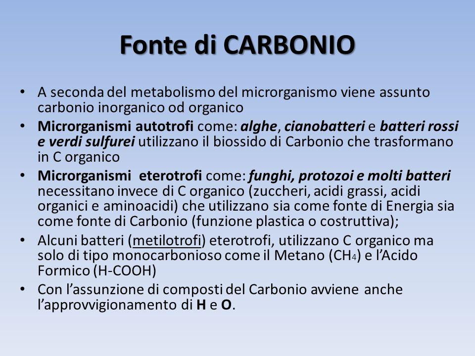 Fonte di CARBONIO A seconda del metabolismo del microrganismo viene assunto carbonio inorganico od organico.