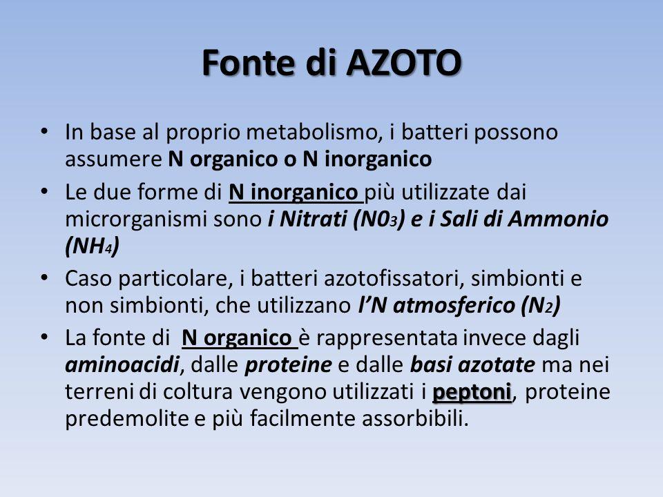 Fonte di AZOTO In base al proprio metabolismo, i batteri possono assumere N organico o N inorganico.