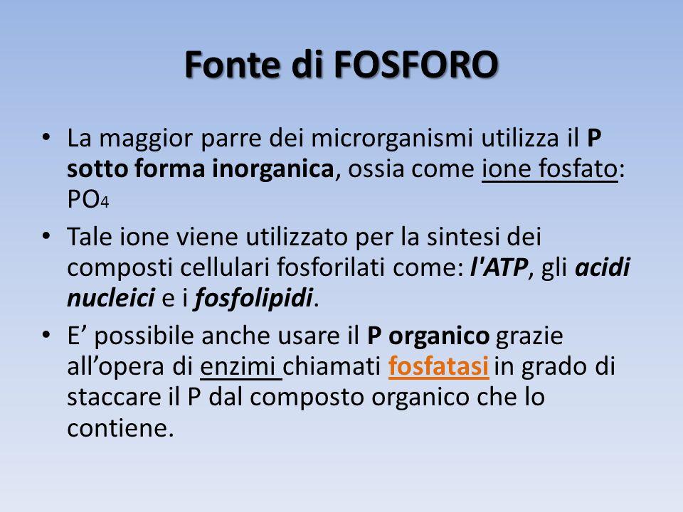 Fonte di FOSFORO La maggior parre dei microrganismi utilizza il P sotto forma inorganica, ossia come ione fosfato: PO4.
