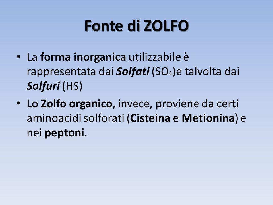 Fonte di ZOLFO La forma inorganica utilizzabile è rappresentata dai Solfati (SO4)e talvolta dai Solfuri (HS)