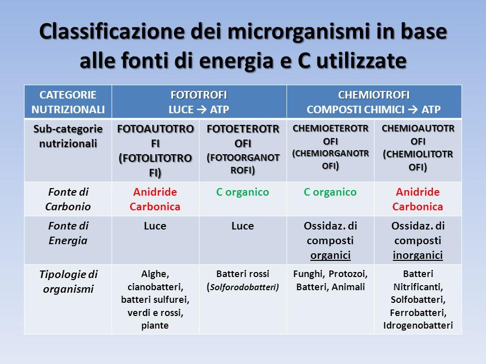 Classificazione dei microrganismi in base alle fonti di energia e C utilizzate