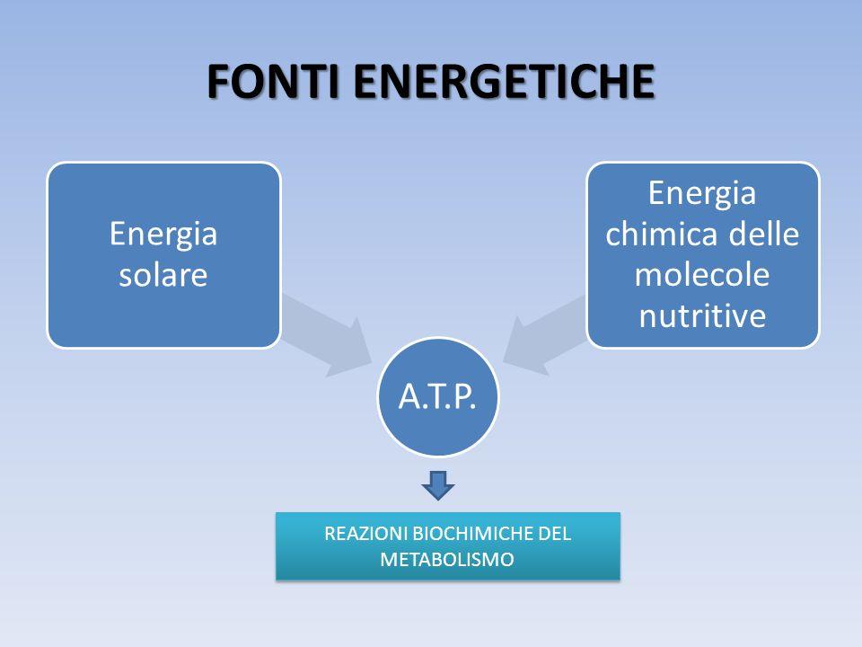 FONTI ENERGETICHE REAZIONI BIOCHIMICHE DEL METABOLISMO A.T.P.