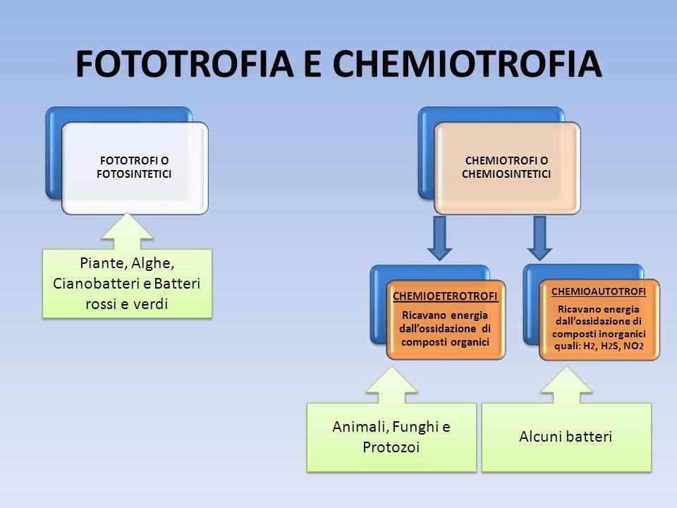 FOTOTROFIA E CHEMIOTROFIA
