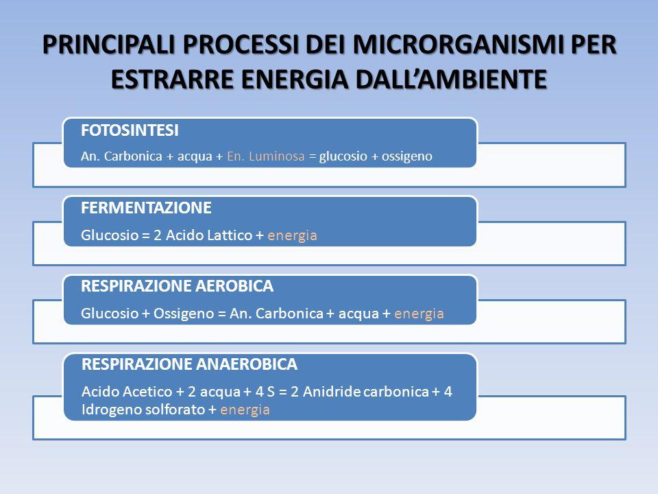 PRINCIPALI PROCESSI DEI MICRORGANISMI PER ESTRARRE ENERGIA DALL'AMBIENTE