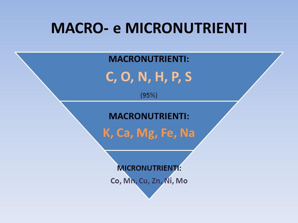 MACRO- e MICRONUTRIENTI