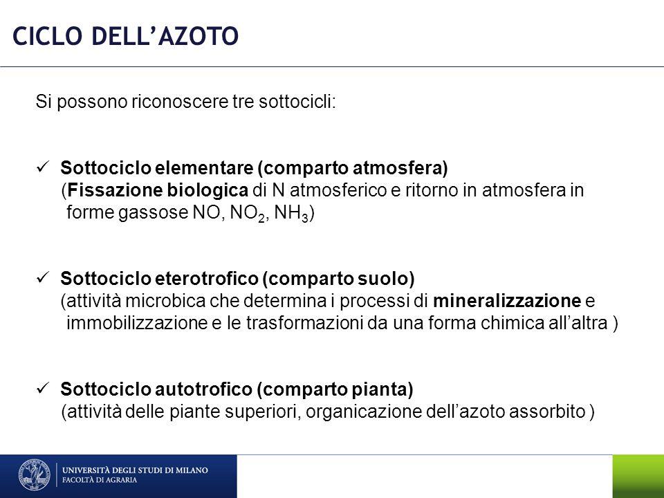 CICLO DELL'AZOTO Si possono riconoscere tre sottocicli: