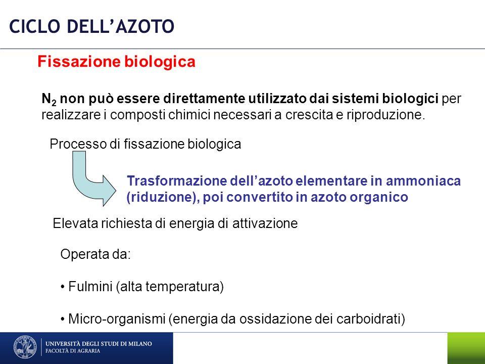 CICLO DELL'AZOTO Fissazione biologica