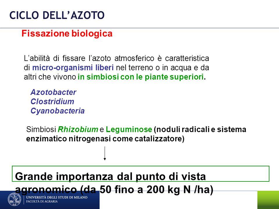CICLO DELL'AZOTO Fissazione biologica.