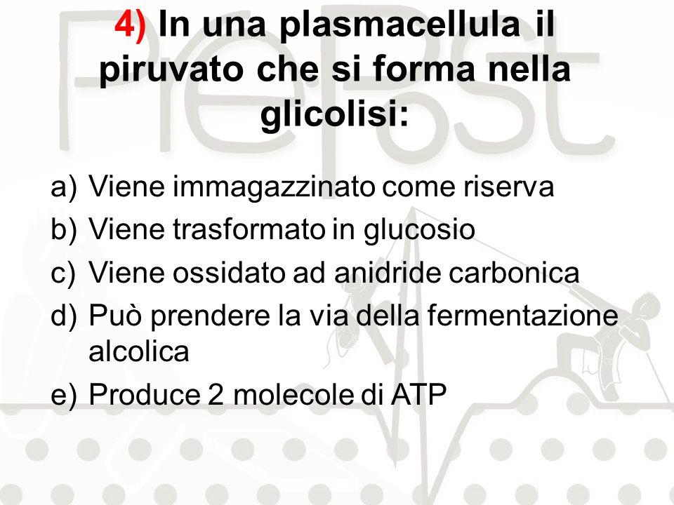 4) In una plasmacellula il piruvato che si forma nella glicolisi:
