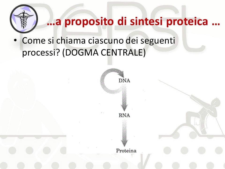 …a proposito di sintesi proteica …