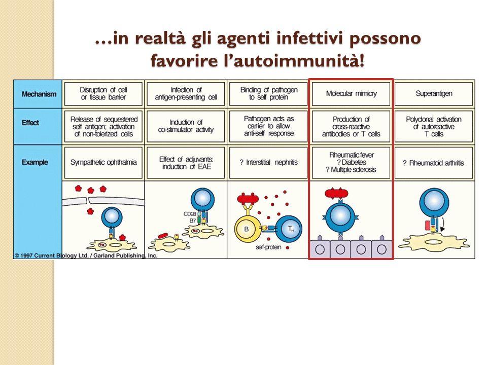 …in realtà gli agenti infettivi possono favorire l'autoimmunità!