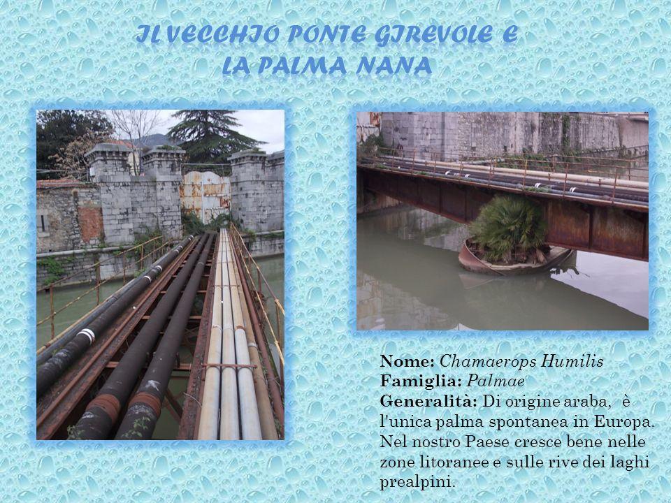 Il vecchio ponte girevole e la palma nana