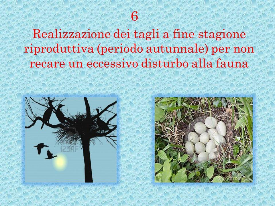 Realizzazione dei tagli a fine stagione riproduttiva (periodo autunnale) per non recare un eccessivo disturbo alla fauna