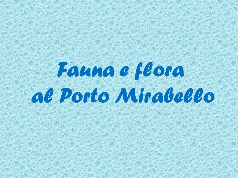 Fauna e flora al Porto Mirabello