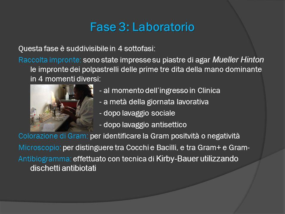 Fase 3: Laboratorio