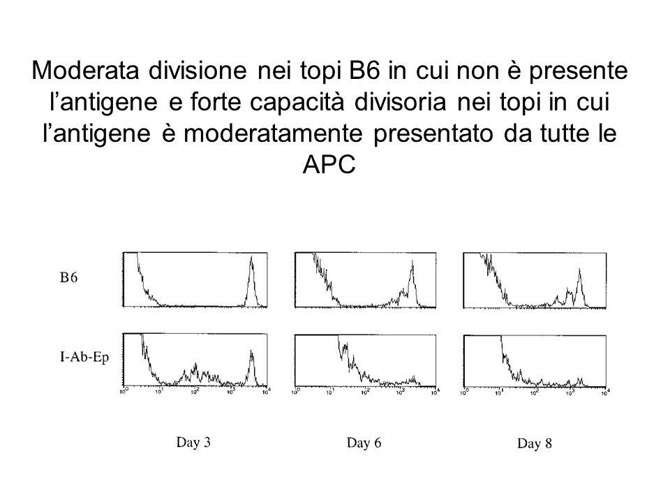 Moderata divisione nei topi B6 in cui non è presente l'antigene e forte capacità divisoria nei topi in cui l'antigene è moderatamente presentato da tutte le APC