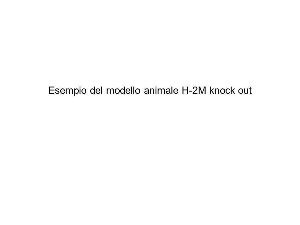 Esempio del modello animale H-2M knock out