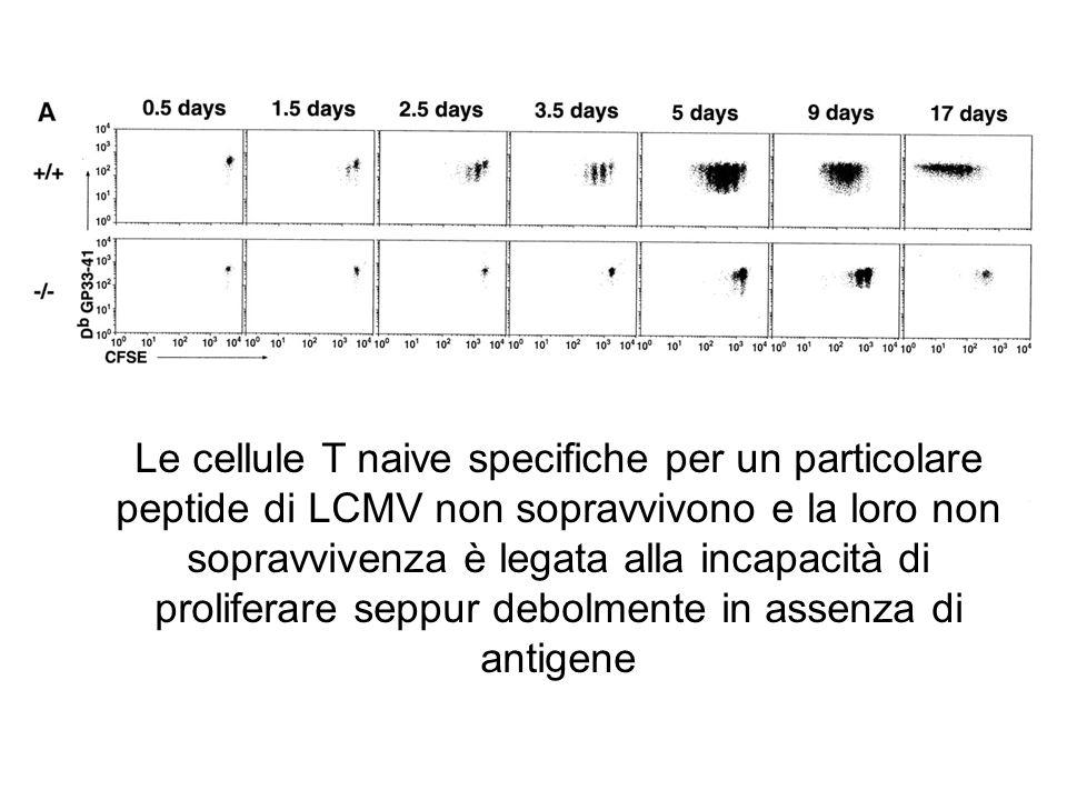 Le cellule T naive specifiche per un particolare peptide di LCMV non sopravvivono e la loro non sopravvivenza è legata alla incapacità di proliferare seppur debolmente in assenza di antigene
