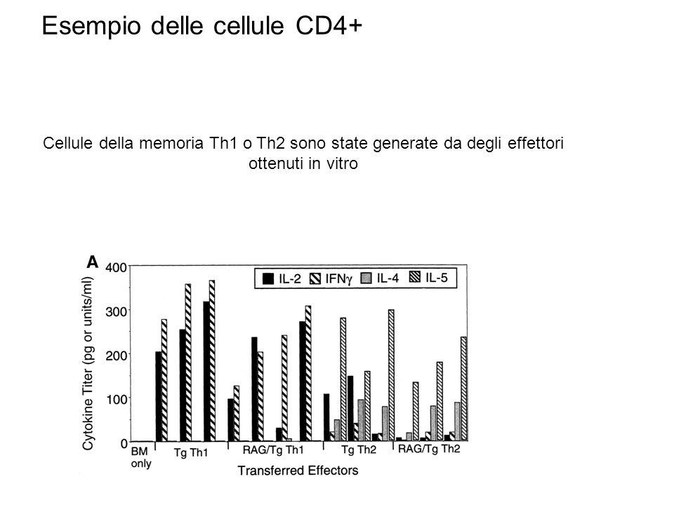 Esempio delle cellule CD4+