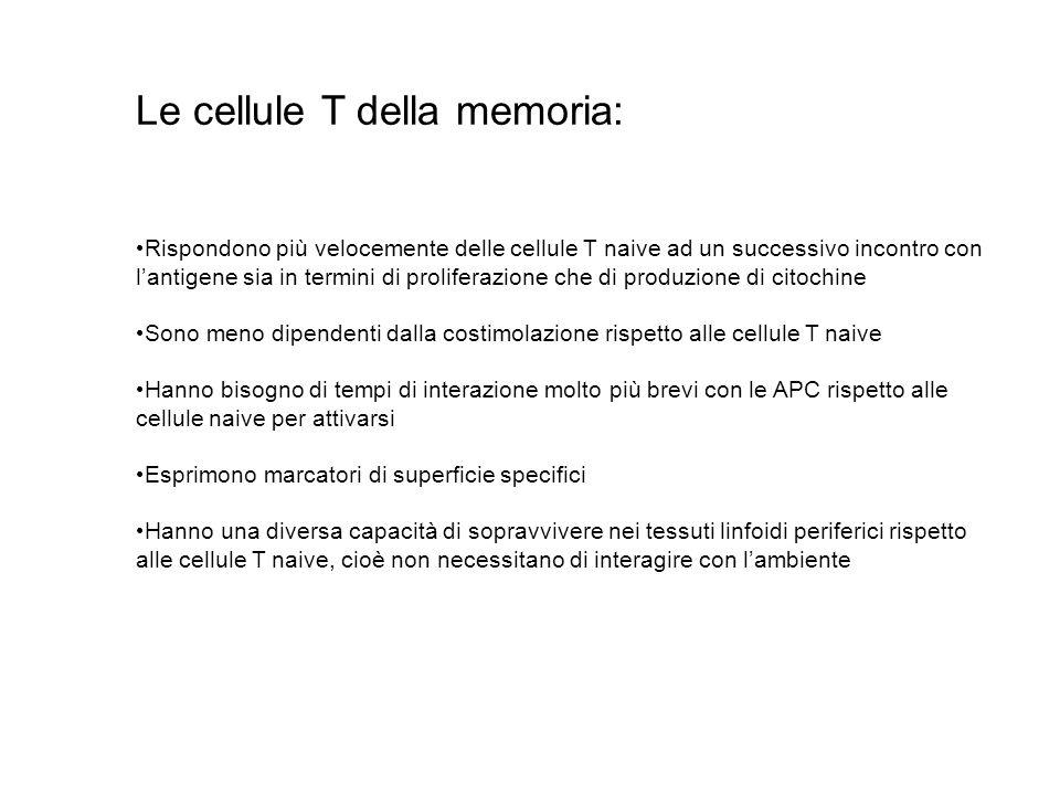 Le cellule T della memoria: