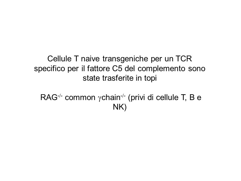 RAG-/- common chain-/- (privi di cellule T, B e NK)