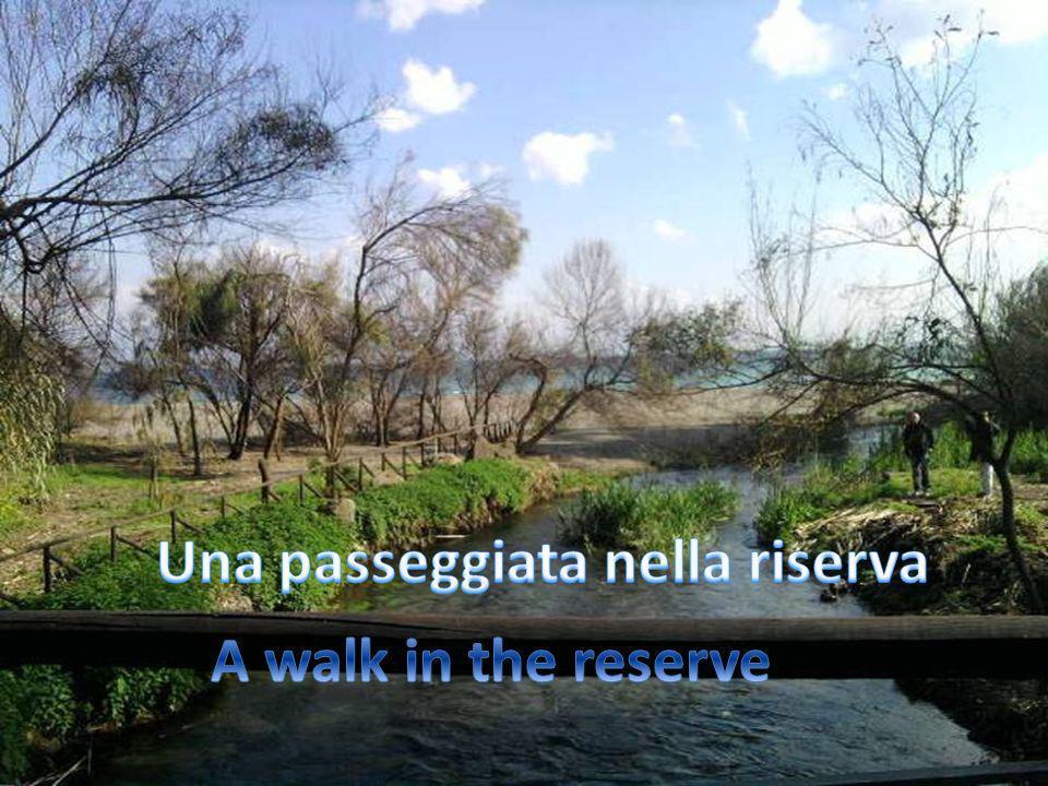 Una passeggiata nella riserva ...