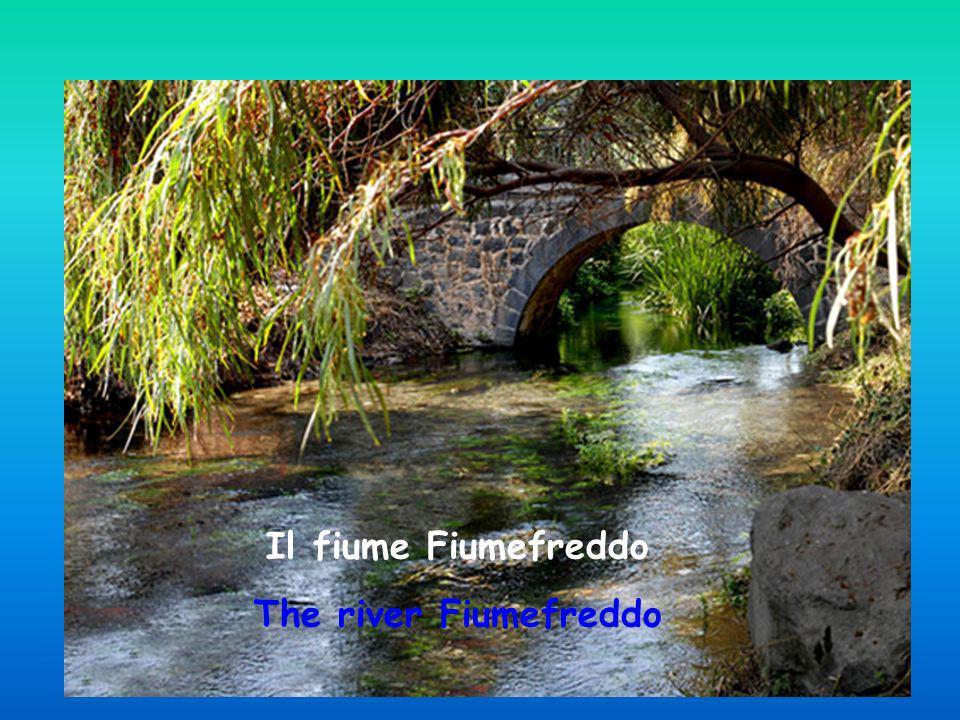 La riserva del fiume Fiumefreddo