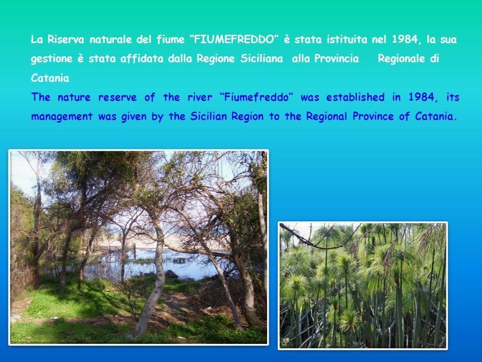 La Riserva naturale del fiume FIUMEFREDDO è stata istituita nel 1984, la sua gestione è stata affidata dalla Regione Siciliana alla Provincia Regionale di Catania
