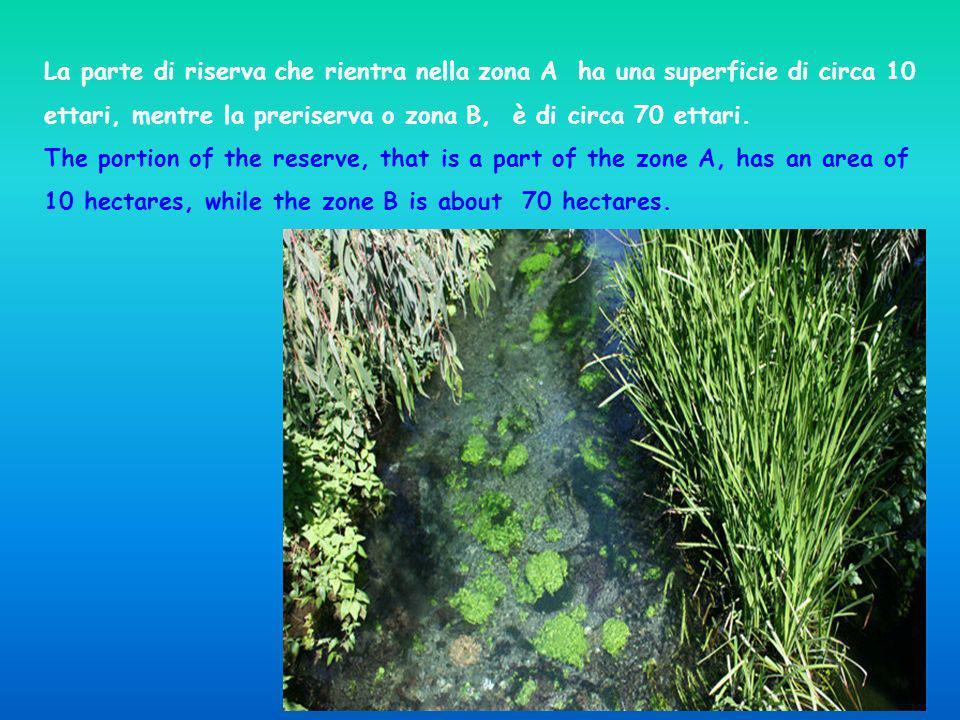 La parte di riserva che rientra nella zona A ha una superficie di circa 10 ettari, mentre la preriserva o zona B, è di circa 70 ettari.