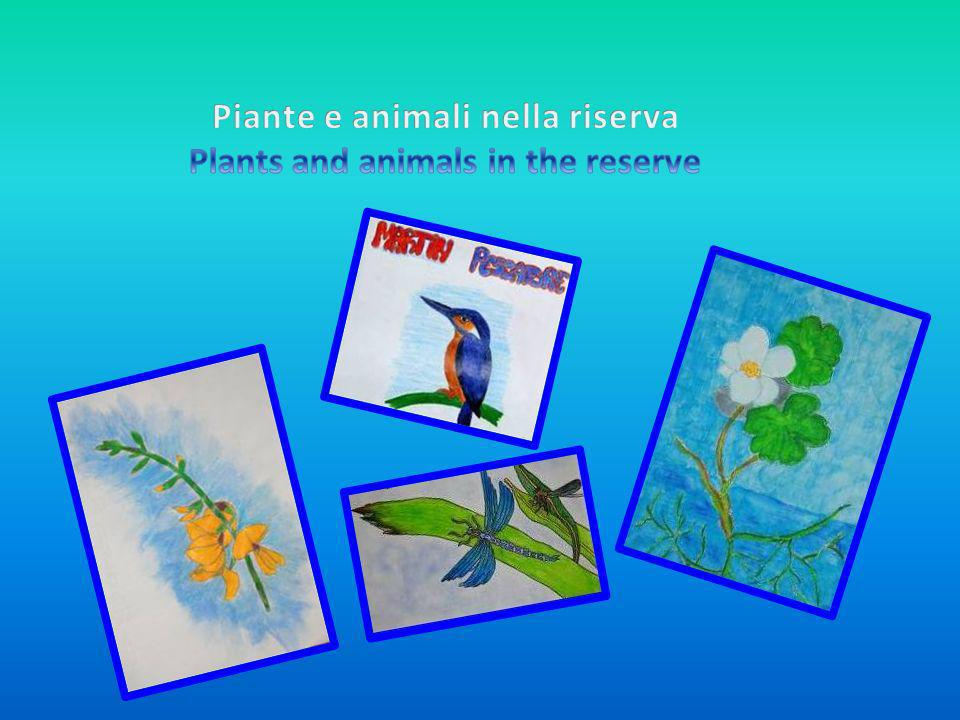 Piante e animali nella riserva Plants and animals in the reserve