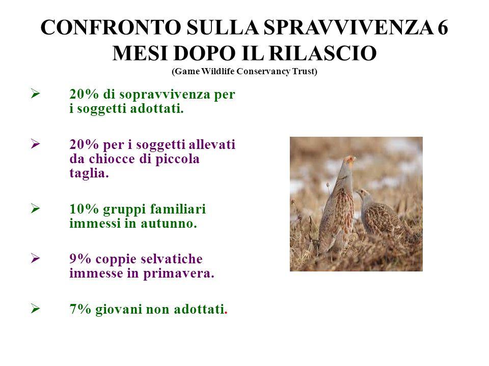 CONFRONTO SULLA SPRAVVIVENZA 6 MESI DOPO IL RILASCIO (Game Wildlife Conservancy Trust)