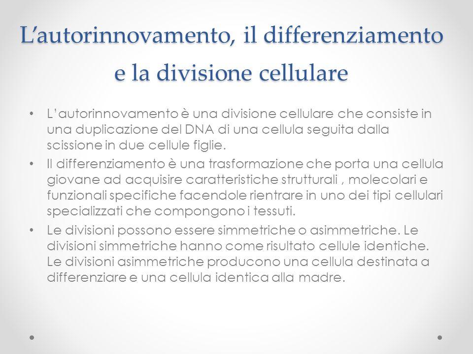 L'autorinnovamento, il differenziamento e la divisione cellulare