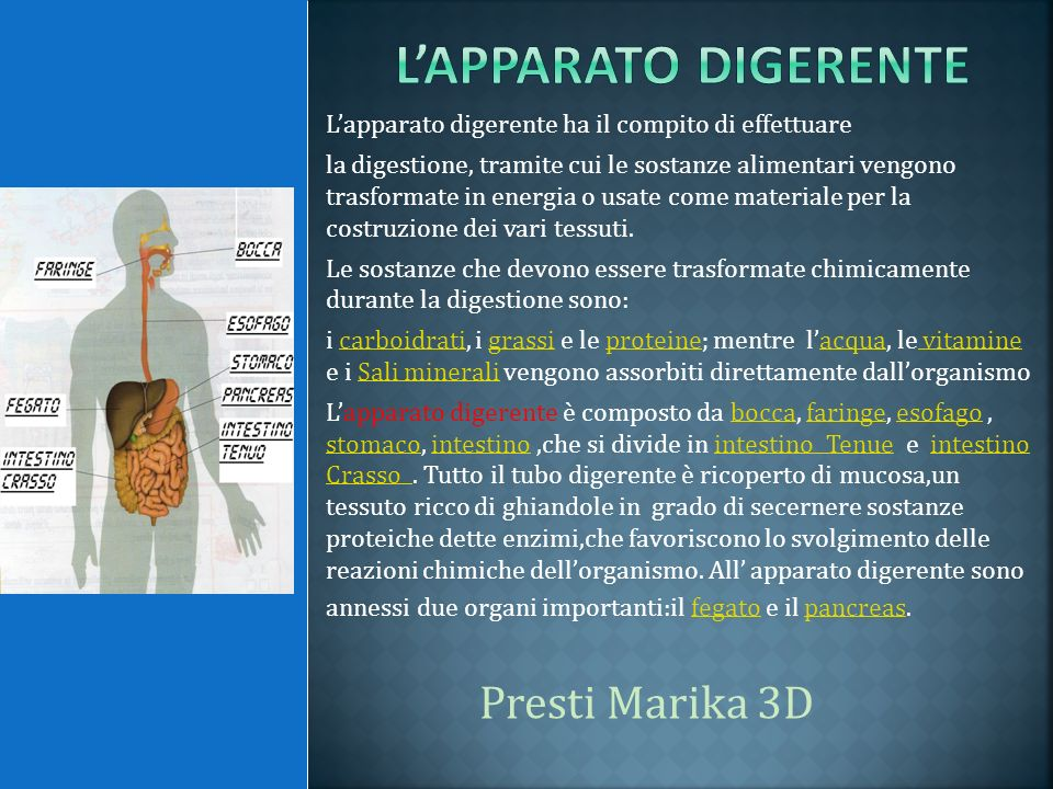 L'apparato digerente Presti Marika 3D