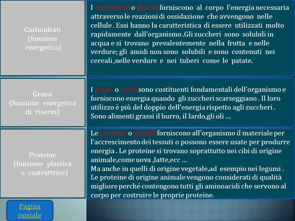 Carboidrati (funzione. energetica)
